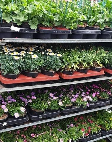 't Bloemenparadijs - Planten